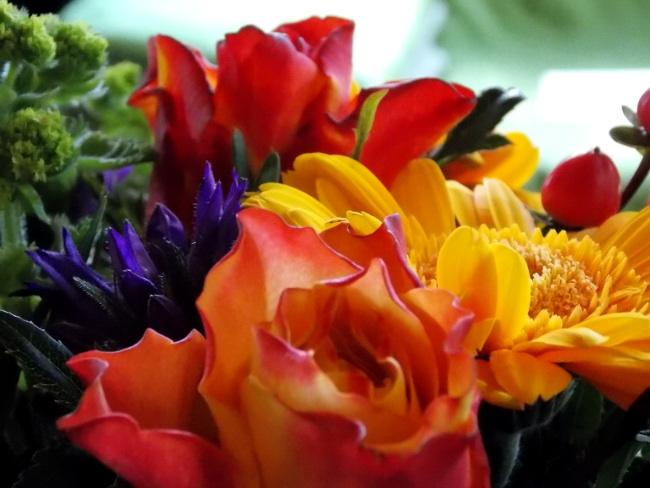 Flowers-Closeup