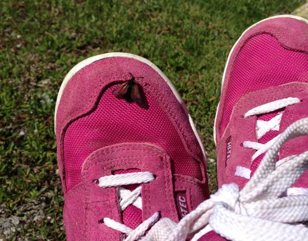 bug-shoe