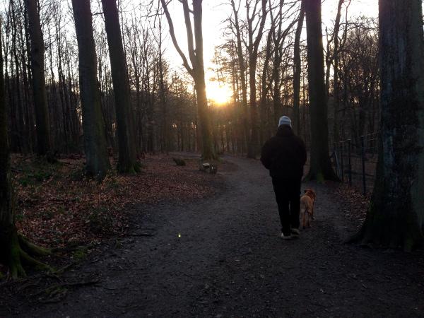Newton-Wald-Spaziergang