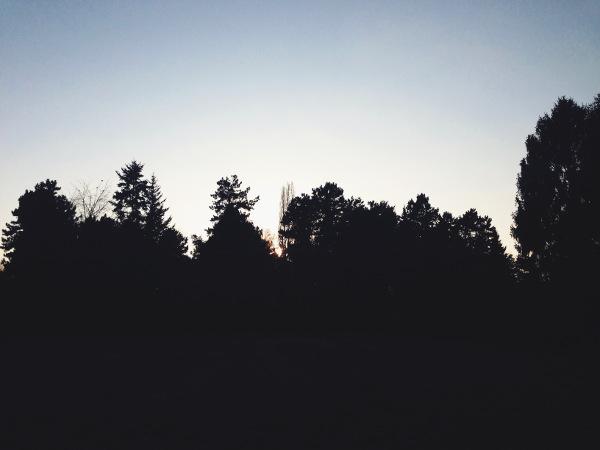 Scherenschnitt Wald