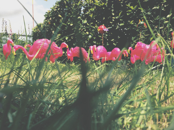 Gen-Flamingos