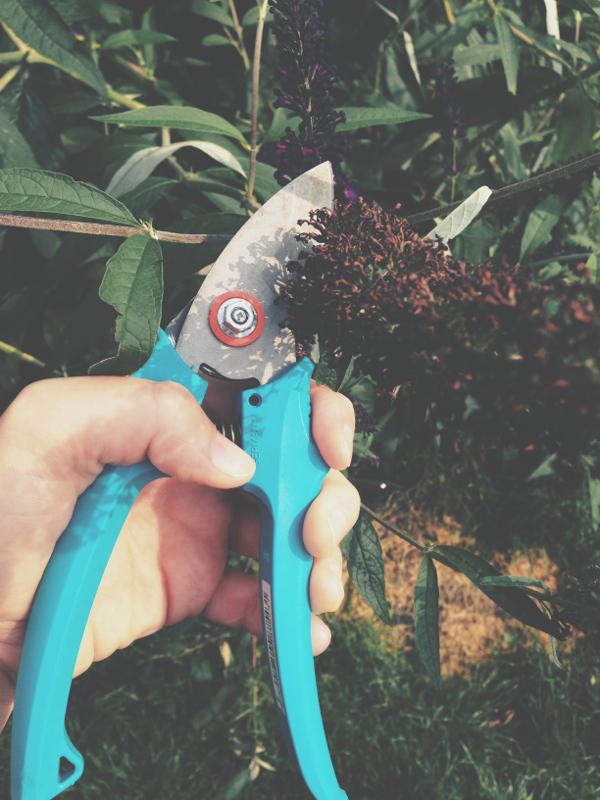 Dienstag Garten