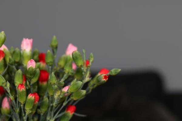 Sieben-Lieben-Blumen