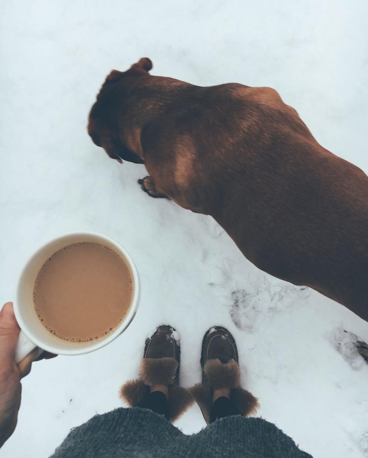 Füße und Hund im Schnne